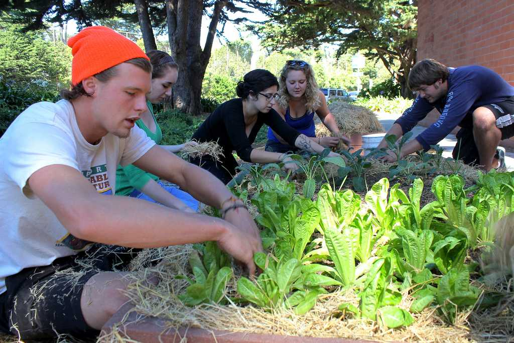(From left) Tyler Wescott, Audrey Janner, Sahar Navid, Morgan Kelley, and Michael Todd of ECO Students add straw to garden beds at the community garden behind Mary Park Hall Sunday Sept. 15, 2013.  ECO Students began growing vegetables and herbs behind Mary Park Hall after learning that the planters were not being used. File photo by Ryan Leibrich / Xpress