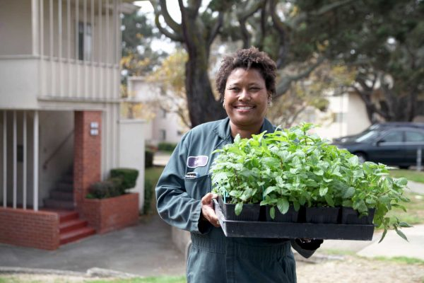 UPN Gardening specialist, Linda Jo Morton, holds the mint plants that will be planted as what she called a homeopathic and ecologically sound way to repel the mosquitos in University Park North, Monday, Oct. 6, 2014. Xpress / Lorisa Salvatin.