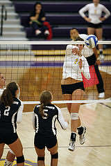 Samantha Krakower (14) of the SF State Gators spikes the ball for a kill against the Chico State Wild Cats, winning the game 3-1 Friday, Oct. 10, 2014. Martin Bustamante / Xpress.