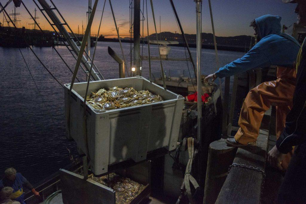 Mike McGowan, with the San Francisco Fishing Association, receives freshly caught Dungeness crab from fellow fishermen at Pier 45 in San Francisco on Friday evening, Nov. 17, 2016. The commercial Dungeness crab season opened on Tuesday, Nov. 15, 2016.