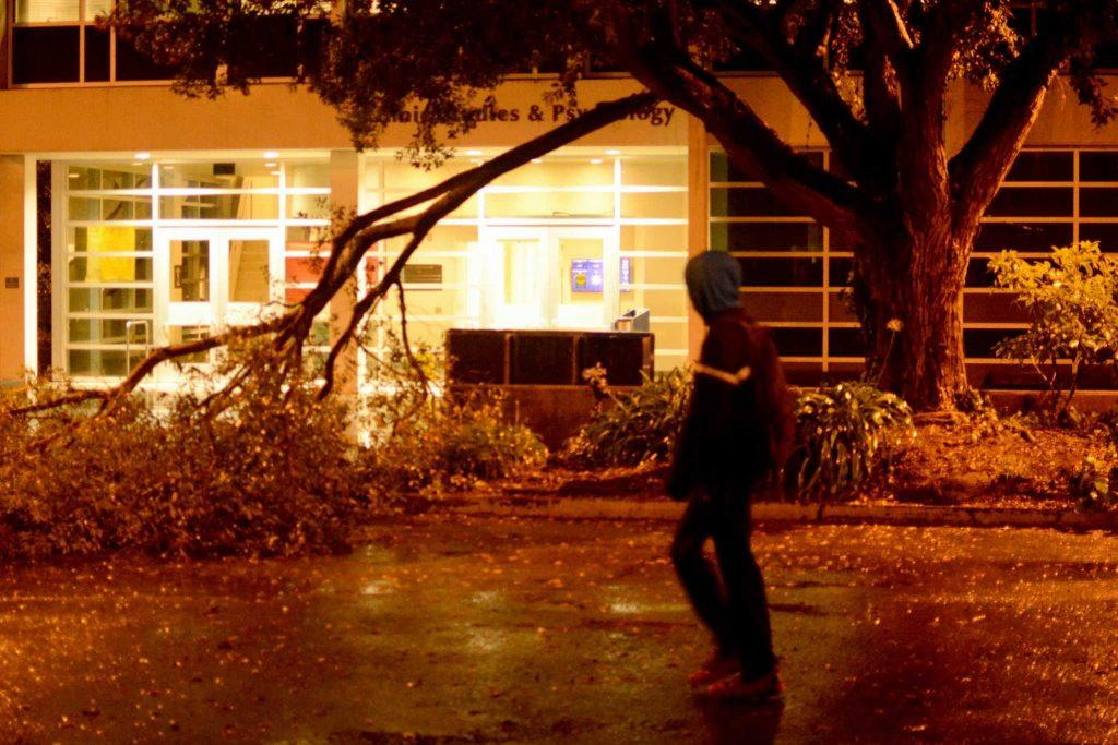 During a strong storm, a branch fell from a tree in front of the College of Ethnic Studies at SF State on Thursday, Dec 15, 2016. Photo by: Aaron Levy-Wolins