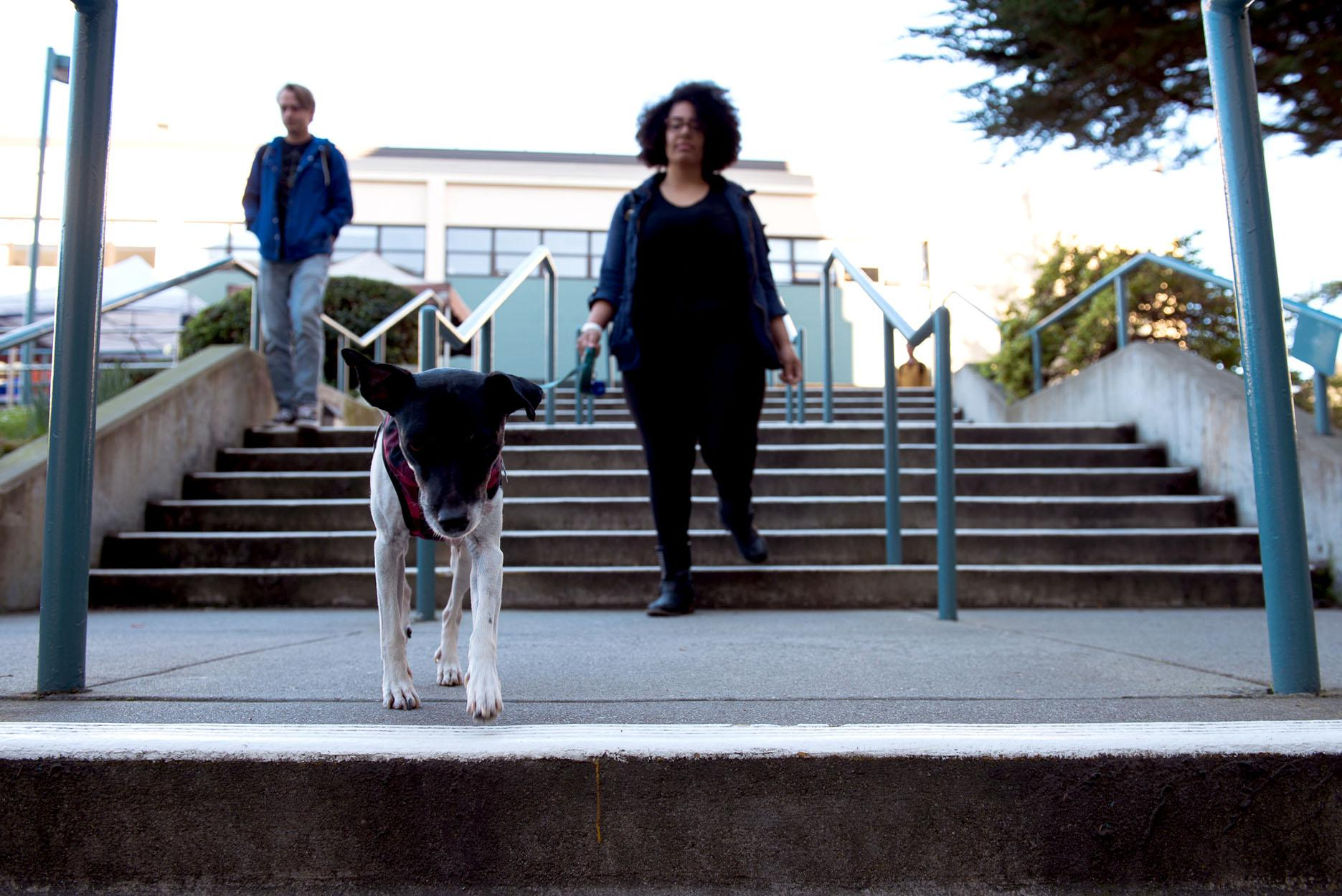 Communications major Mia Anderson and her dog Xena head down the stairs to the Humanities building at SF State on Thursday, Feb. 15. (David Rodriguez/Golden Gate Xpress)