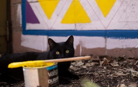 The neighbor's cat hanging out with the October family in the backyard as they paint a mural on fence. (Maddison October / Golden Gate Xpress)