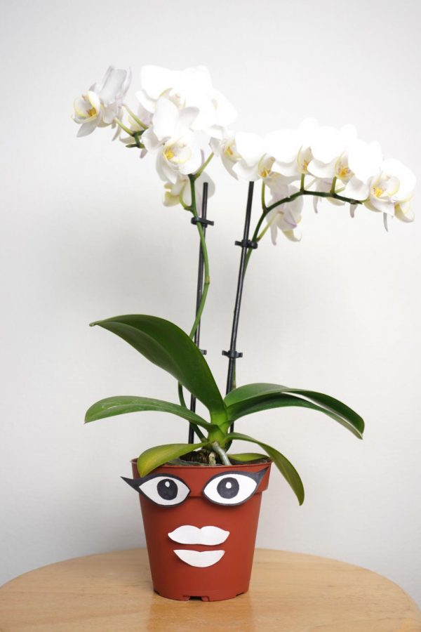 An orchid plant character for Dylan Mckeever's Plant Talk show in her home in San Francisco, Calif., on Saturday, Sep. 19, 2020. (Alex Drew / Xpress Media)